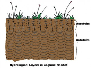 The acrotelm and catotelm hydrological layers on Irish raised and blanket bogs.