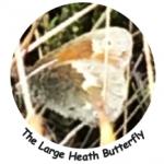 Large Heath