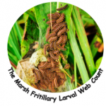 Marsh Fritillary Larval Web count Image