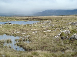 Irish Atlantic Blanket Bog Habitat