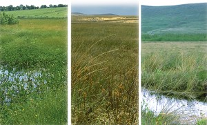 The Irish Bogs bought by the Dutch Foundation for Conservation of Irish Bogs - Scragh Bog, Clochar na gCon Bog and Cummeragh River Bog