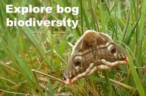 explorebogbio