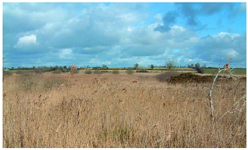 Irish Fen Habitat - Pollardstown Fen, Co. Kildare