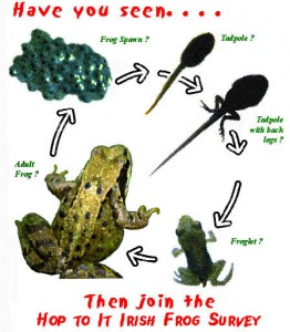Life Cycle of the Common Frog (Rana temporaria)