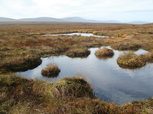 Liffey Head Mountain Blanket Bog Habitat in Ireland