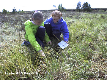 Bog Plant Field Studies - School Visits Bog of Allen Nature Centre