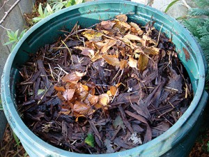 Compost in a Compost Cone