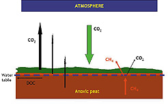 Greenhouse Gases in an Intact Peatland
