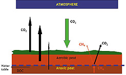 Greenhouse Gases in a Disturbed Peatland