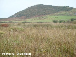 Fenor Bog NNR, Co. Waterford, Ireland is overlooked by Ballyscanlon Hill