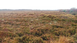 Lodge Bog, Co. Kildare, Ireland is a nature reserve owned and managed by the Irish Peatland Conservation Council