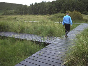 The boardwalk on Fenor Bog, Co. Waterford, Ireland