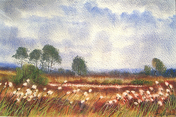 Late Summer Bogland, Watercolour by James Flack