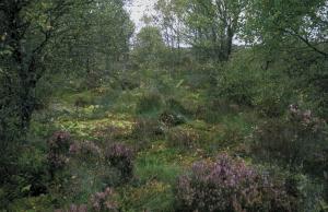 bogwoodlandpfossallsaints